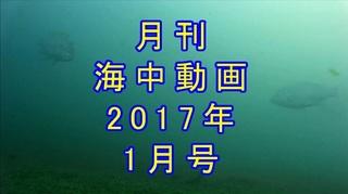 月刊海中動画1月サムネ